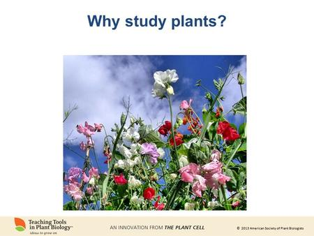 © 2013 American Society of Plant Biologists Why study plants?