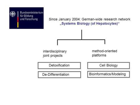 Since January 2004: German-wide research network Systems Biology (of Hepatocytes) interdisciplinary joint projects method-oriented platforms De-Differentiation.