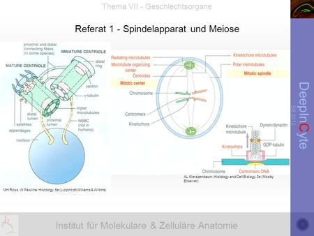 Referat 1 - Spindelapparat und Meiose