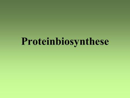 Proteinbiosynthese.