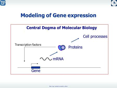 Edda Klipp, Humboldt-Universität zu Berlin Modeling of Gene expression. : Gene mRNA Proteins Cell processes Central Dogma of Molecular Biology Transcription.