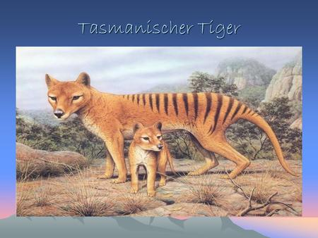 Tasmanischer Tiger. Ausgestorben: Tasmania, Australia, 1936 Lithograph von Joseph Wolf, plate in Proceedings of the Zoological Society of London, Mammalia.