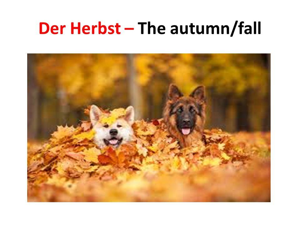 Der Winter – The winter
