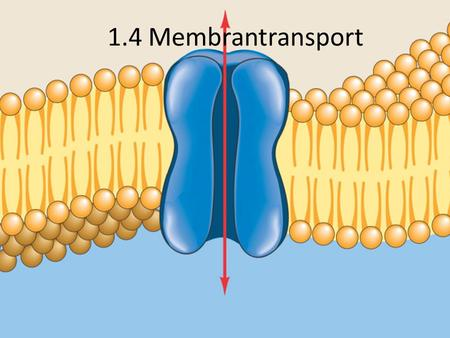 1.4 Membrantransport.