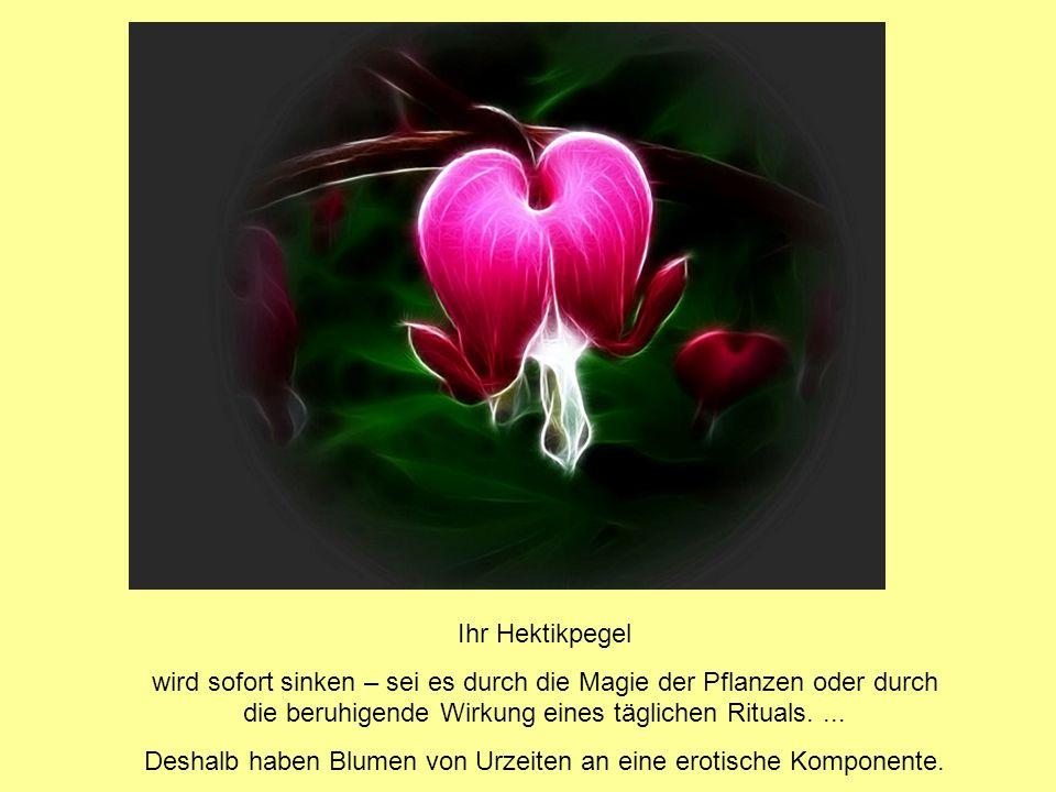 Blumen erzählen Geschichten: Sie sprechen einzelnen Blüten eine symbolische Kraft zu und legen Regeln fest, nach denen Blumen als geheime Zeichen für Liebesbotschaften fungieren sollten.