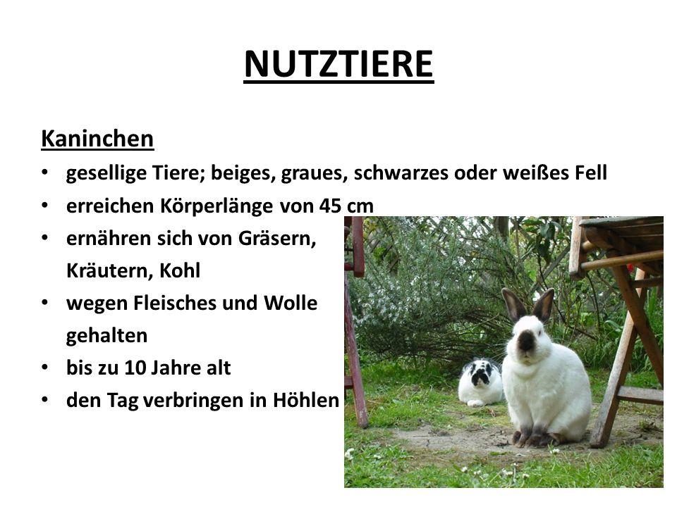 NUTZTIERE Zusammenfassung: HAUSGANS – HÜHNER - KANINCHEN -Warum werden diese Tiere gezüchtet.