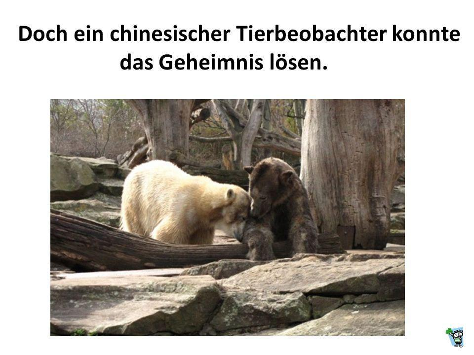 Doch ein chinesischer Tierbeobachter konnte das Geheimnis lösen.