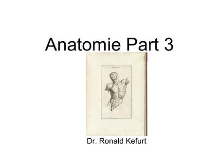 Anatomie Part 3 Dr. Ronald Kefurt.