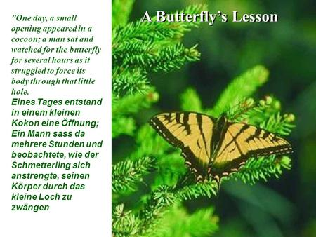 "A Butterfly's Lesson ""One day, a small opening appeared in a cocoon; a man sat and watched for the butterfly for several hours as it struggled to force."
