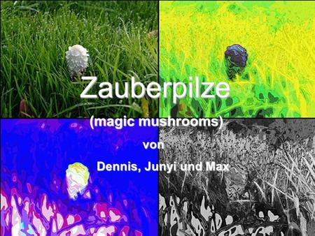 Zauberpilze (magic mushrooms) von Dennis, Junyi und Max Cover.