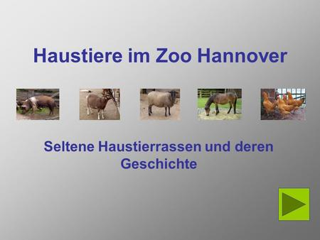 Haustiere im Zoo Hannover