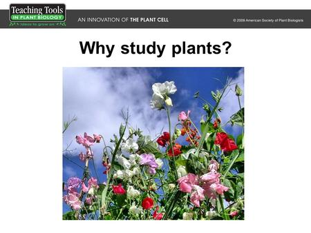 Why study plants?.