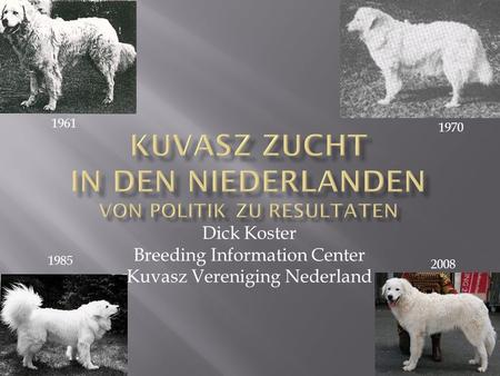Dick Koster Breeding Information Center Kuvasz Vereniging Nederland 1970 1961 1985 2008.