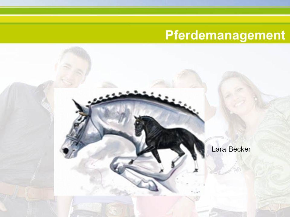 Inhalt Dauer und Aufbau des Studiums Pferdemanagement Voraussetzungen Sprachkurse Praktika und Exkursionen Abschluss Möglichkeiten im Berufsleben Das Leben in den Niederlanden