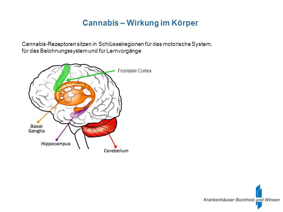 Cannabis – Muskelentspannend bei Spastik.