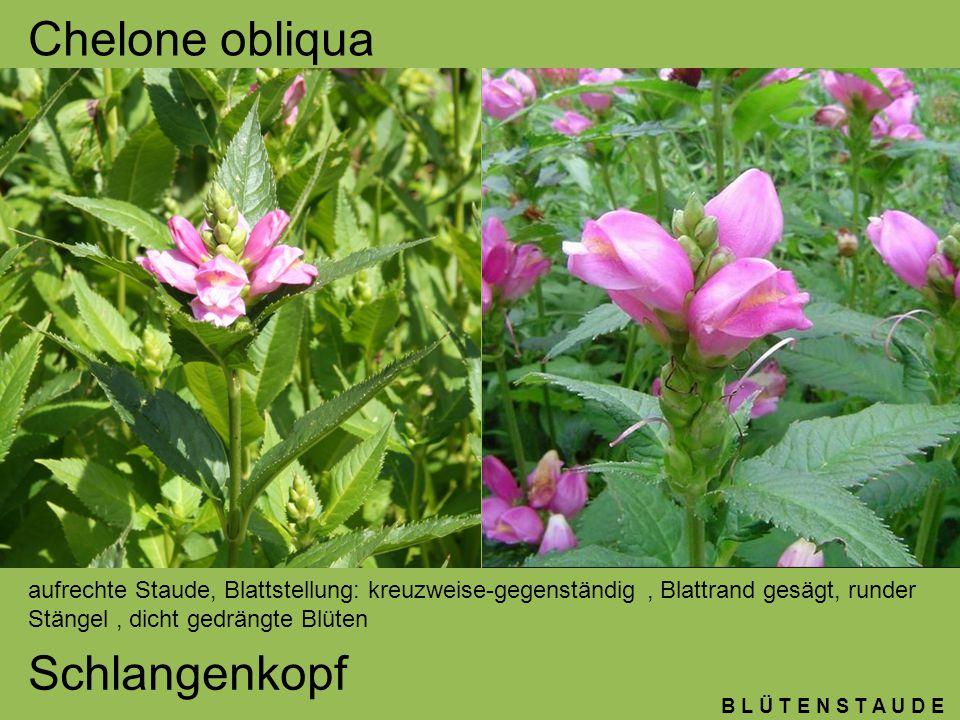 Pflanzenkenntnisse 3.