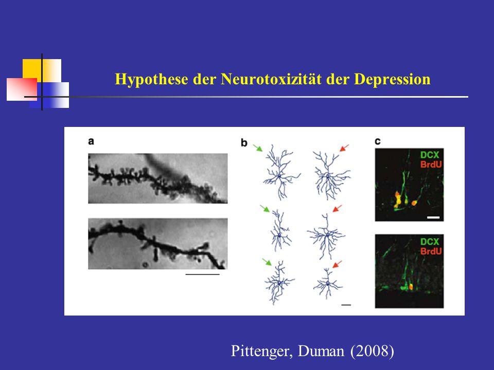 Dysfunktion in der Neurogenese limbischer Strukturen bei der Depression Stress reduziert die Expression von neurotrophen Wachstumsfaktoren (BDNF) in limbischen Strukturen der Stimmungsregulation: Atrophiezeichen in der Hippocampusformation u.