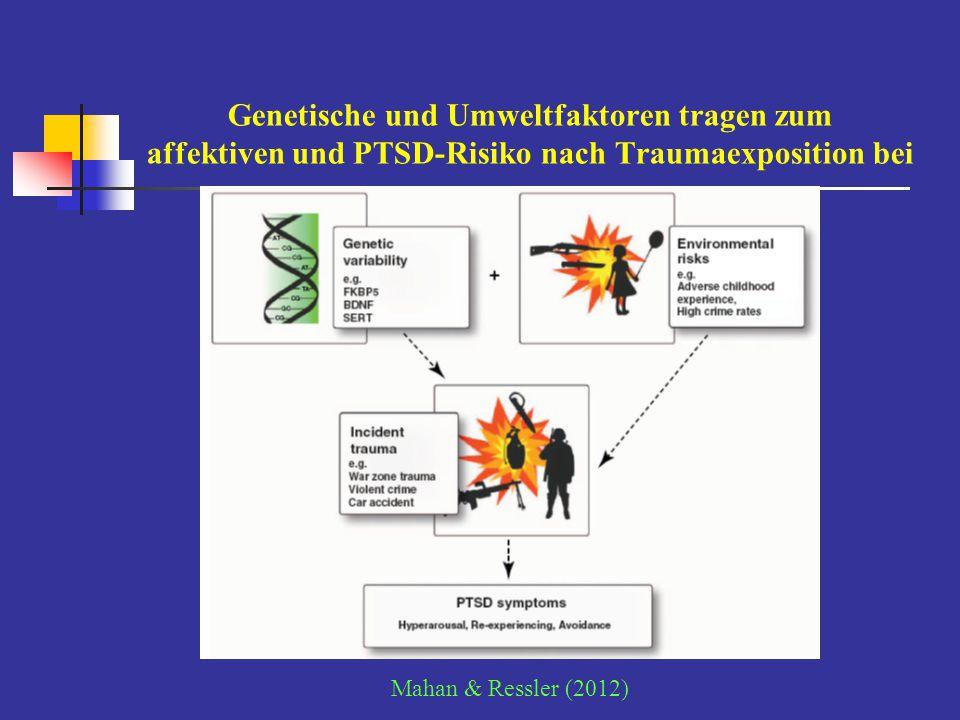 Serotonin-Transporter-Genpolymorphismus Interaktion von Amygdala – ACC: genetischer Vulnerabilitätsmechanismus für Depression Träger des s-Allels in funktionellem 5´ Promotor Polymorphismus des Serotonin-Transporter-Gens: erhöhtes ängstliches Temperament, verstärkte Reaktivität der Amygdala, erhöhtes Depressionsrisiko morphometrisch: verringertes Volumen von Amygdala und Cingulum perigenuale (ACC) Funktionsanalyse: Entkoppelung des Amygdala-Cingulum-Regelkreises in der Verarbeitung von Angststimuli [Pezawas et al.