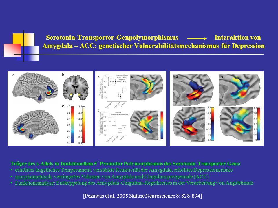 Serotonin-Transporter-Genpolymorphismus Interaktion von Amygdala – ACC: genetischer Vulnerabilitätsmechanismus für Depression dieser Serotonin-Transporter-Gen-Polymorphismus funktionell relevant nur unter stressvollen Umweltbedingungen, möglicherweise auch nur in einem kritischen Zeitfenster der frühen Entwicklung
