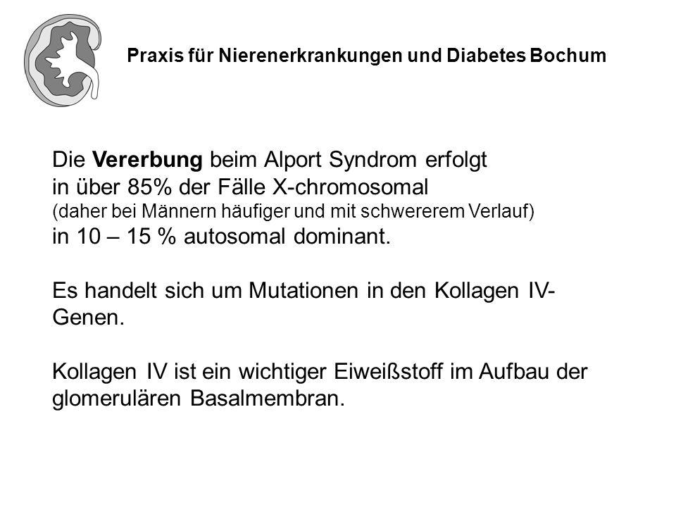 Praxis für Nierenerkrankungen und Diabetes Bochum Symptome des Alport Syndroms (Mikro-) Hämaturie (Nachweis von Blut im Urin) Proteinurie (vermehrte Eiweißausscheidung) Innenohrschwerhörigkeit Augenveränderungen (selten) bei Verschlechterung der Nierenfunktion Bluthochdruck