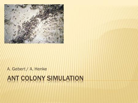 A. Gebert / A. Henke Ant colony simulation.
