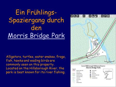 Ein Frühlings- Spaziergang durch den Morris Bridge Park Alligators, turtles, water snakes, frogs, fish, hawks and wading birds are commonly seen on this.