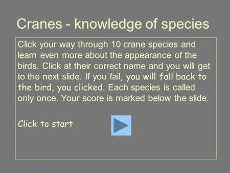 Cranes - knowledge of species Click your way through 10 crane species and learn even more about the appearance of the birds. Click at their correct name.