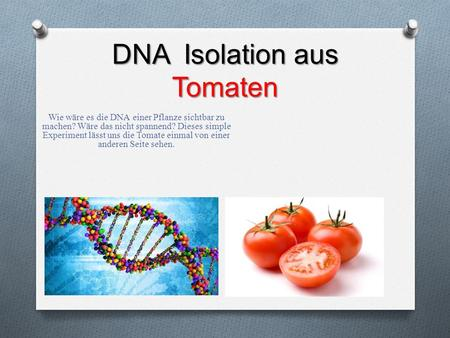DNA Isolation aus Tomaten