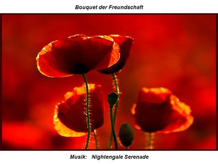 Bouquet der Freundschaft Musik: Nightengale Serenade.