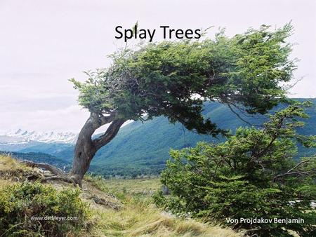 Splay Trees Von Projdakov Benjamin.