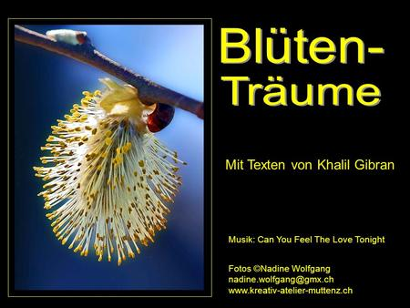 Fotos ©Nadine Wolfgang  Musik: Can You Feel The Love Tonight Mit Texten von Khalil Gibran.