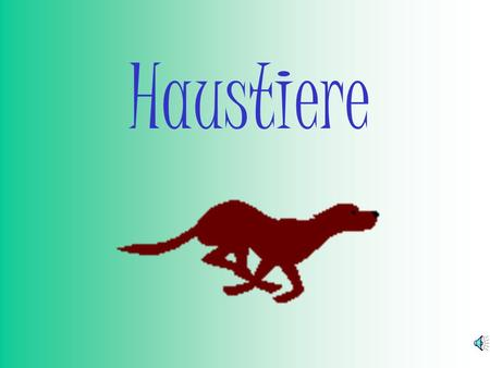 Haustiere Hast du ein Haustier? Do you have a pet?