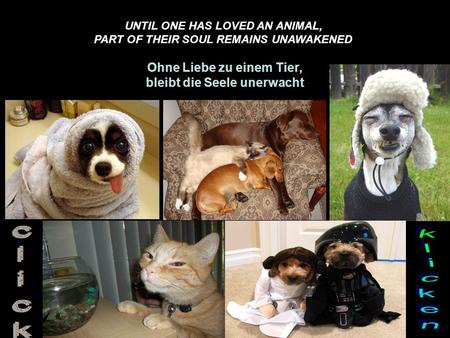 UNTIL ONE HAS LOVED AN ANIMAL, PART OF THEIR SOUL REMAINS UNAWAKENED Ohne Liebe zu einem Tier, bleibt die Seele unerwacht.