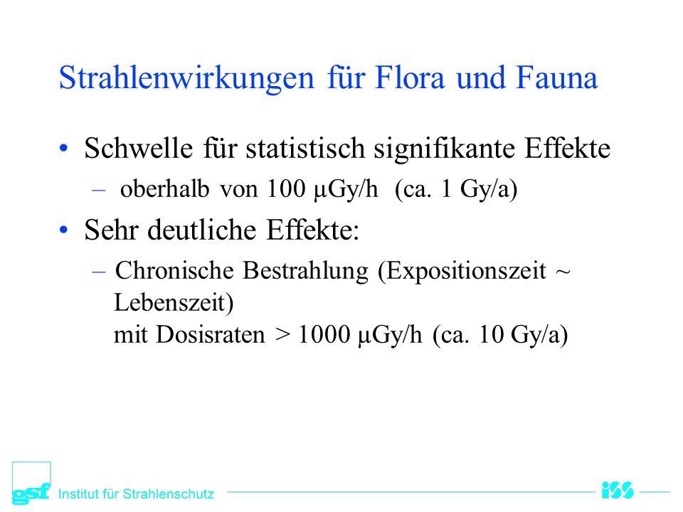 Strahlenschäden an Bäumen in Kysthim (UNSCEAR 1996) Sr-90 Aktivität (MBq/m²) Dosis, (Gy) Nadeln Dosis, (Gy) Knospen Wirkung 1,5-1,85-102-4Vertrocknung von Nadeln Absterben von Pollen und Samen Reduktion des Wachstums 3,7-4,410-205-1095 % der Nadeln vertrocknet 6,3-7,420-4010-20Nadelbäume: Vollständiges Absterben 37-59-40-60Birke: Vertrocknung des oberen Kronenbereiches: alte B.1% junge B.