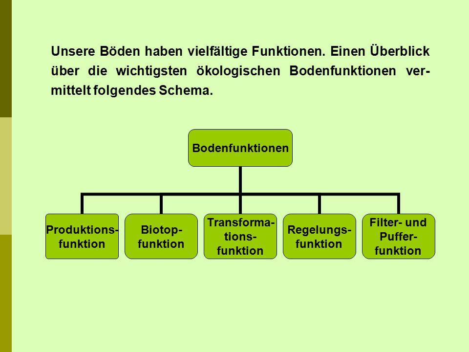 Schwarzerden gehören zu den fruchtbarsten und ertragreichsten Böden Deutschlands.