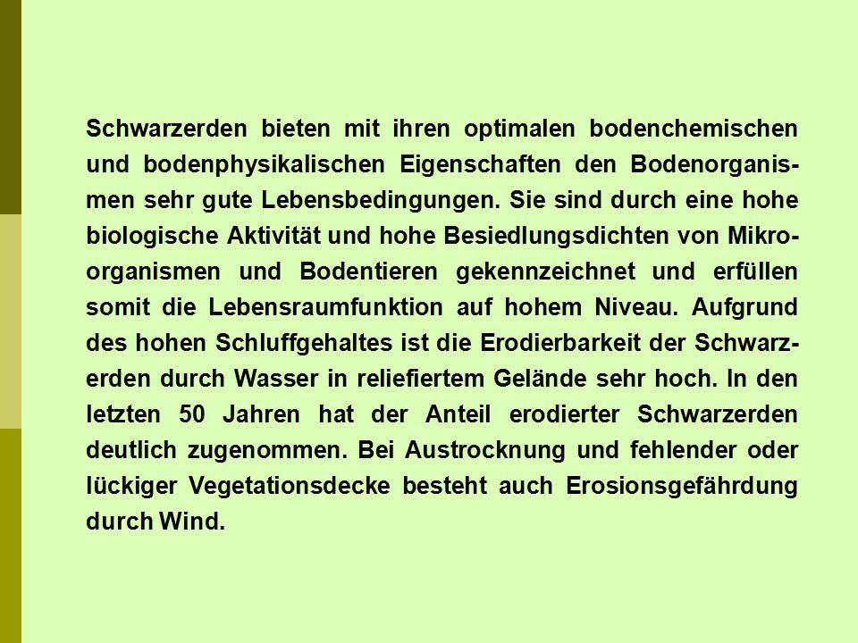 Die Schwarzerden konzentrieren sich in Deutschland überwiegend auf niederschlagsarme, trockene Lössgebiete, wie die Magdeburger Börde, das Harzvorland, die Querfurter Platte, das Hallesche und Köthener Ackerland, das Thüringer Becken, die Hildesheimer Börde, die Wetterau, den Kraichgau, das Oberrheintal sowie das Pfälzer Tiefland.