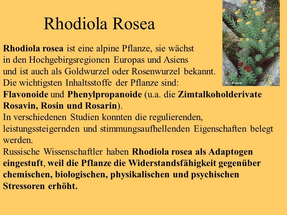 Frühe Dokumentationen der Anwendung von Rhodiola Rosea bis Heute.