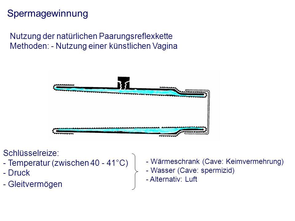 Spermabeurteilung - siehe Spermatologische Untersuchung Spermaverarbeitung Ziel: Erhaltung der Befruchtungsfähigkeit über einen möglichst langen Zeitraum Verdünnung - ausgehend von der Dichte des Ejakulates - Zusatz von Verdünnern: - Volumenvergrößerung - Nährstoffe (Glukose, Fruktose) - Schutzstoffe: Eidotter und synthetische - Kryoprotektiva - Erhaltung des osmotischen Druckes (250-300 mOsm/l) - Pufferkapazität (pH: 6-7) - Verhinderung von Keimvermehrung - Volumenvergrößerung - Konservierung