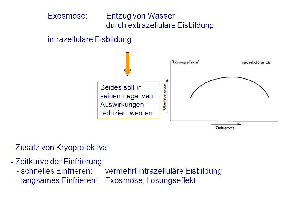 Verdünnung -Temperaturangleichung von Samen und Verdünner - Beachtung bestimmter Haltezeiten (Äquilibrierung – bei TGS) 1.Berechnung der erforderlichen Verdünnermenge - erforderliche Gesamtspermienzahl pro Portion - Anteil der zu erwartenden vorwärtsbeweglichen Spermien zum Zeitpunkt der Besamung 2.Bestimmung des Endvolumens nach Verdünnung Gesamtspermienzahl x Vorwärtsbewegung Faktor x Spermien pro Besamungsdosis = Anzahl Samenportionen Anzahl Samenportionen x Volumen Portion = Endvolumen nach Verdünnung u.