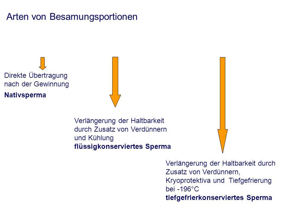 Nativsamen Vorteile: - wenig Aufwand (Verarbeitung, Besamungstechnik) - geringe Schädigung der Spermien (gute Befruchtungskompetenz) - leichte Besamungstechnik Nachteile: - Besamungsportion muss sofort versamt werden - örtliche und zeitliche Bindung Typische Situation: - Hündin lässt Rüden trotz richtigem Besamungszeitpunkt nicht decken - Rüde wird abgesamt – Hündin wird besamt