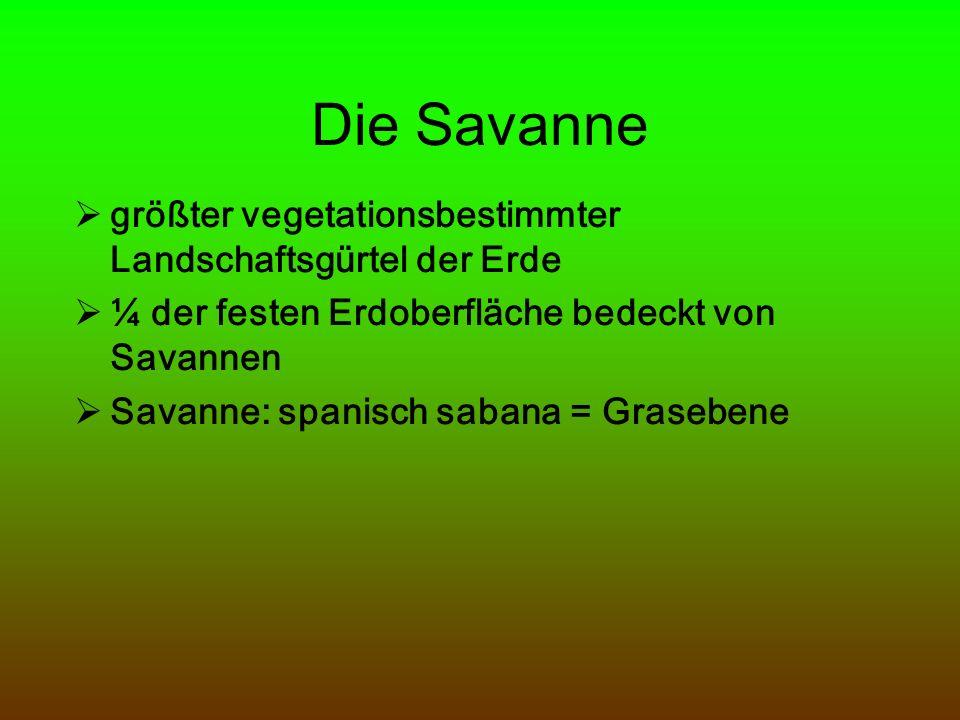 Savannenarten Feuchsavanne Trockensavanne Dornensavanne (Dornstrauchsavanne)