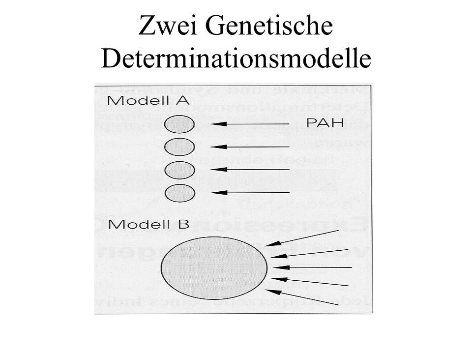 Erfahrungsbedingte Genexprimierung Epigenetische Einflussfaktoren (neuronale Aktivität durch Lernerfahrungen vor allem während der postnatalen Entwicklung) sind unerlässlich um die endgültige voll funktionsfähige Netzwerkstruktur entstehen zu lassen.