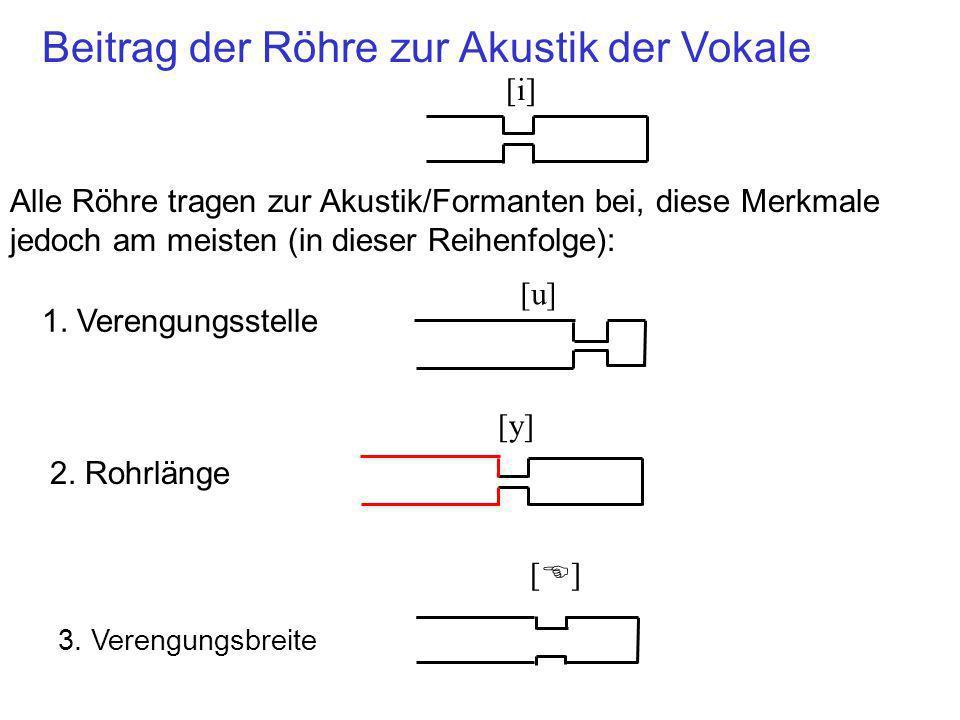 Kaum akustische Unterschiede wegen: Der Biegung vom Vokaltrakt Kleine Variationen in der Breite hinter oder vor der maximalen Verengung