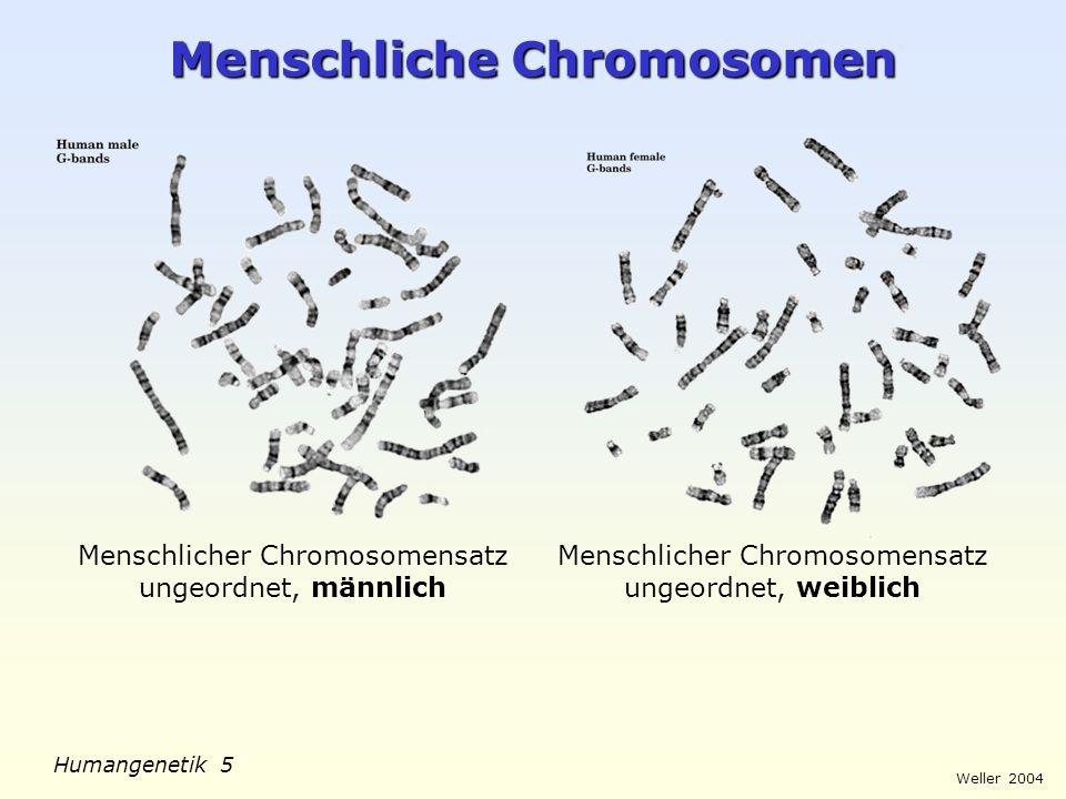 Weller 2004 Humangenetik 6 Menschliche Chromosomen Karyogramm: Menschlicher Chromosomensatz geordnet, männlich