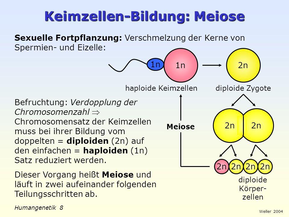 Weller 2004 Humangenetik 9 Meiose: 1.