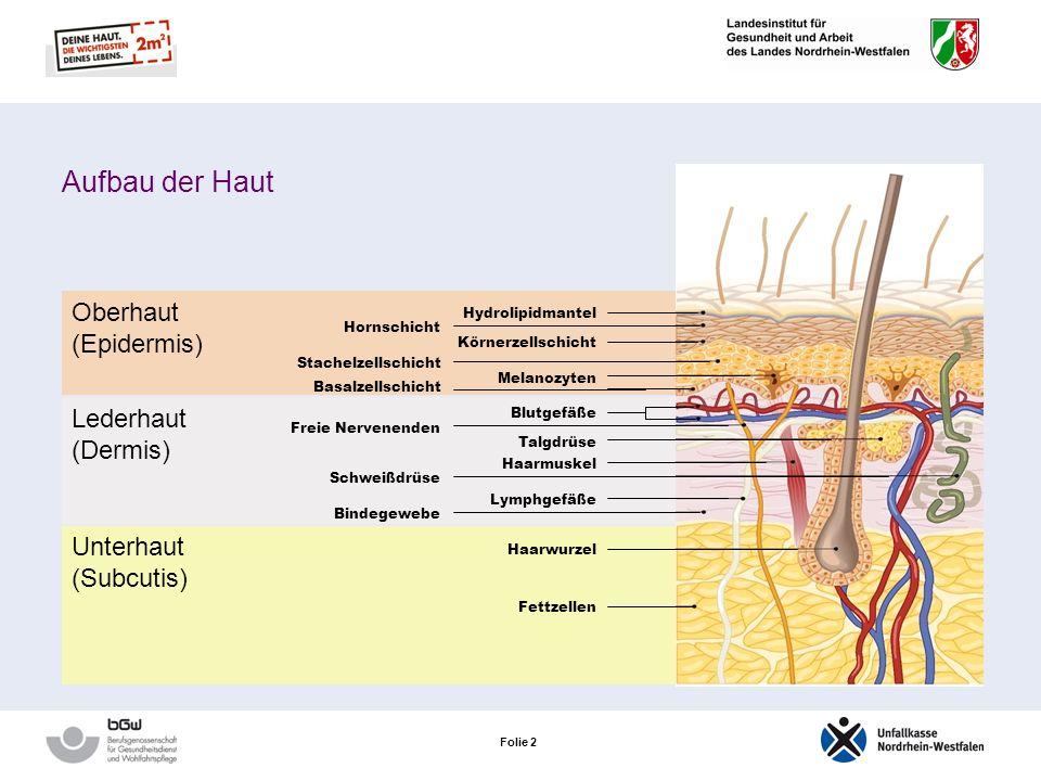 Folie 2 Oberhaut (Epidermis) Lederhaut (Dermis) Unterhaut (Subcutis) Haarwurzel Fettzellen Hydrolipidmantel Körnerzellschicht Melanozyten Stachelzellschicht Basalzellschicht Hornschicht Blutgefäße Talgdrüse Haarmuskel Lymphgefäße Freie Nervenenden Schweißdrüse Bindegewebe Aufbau der Haut
