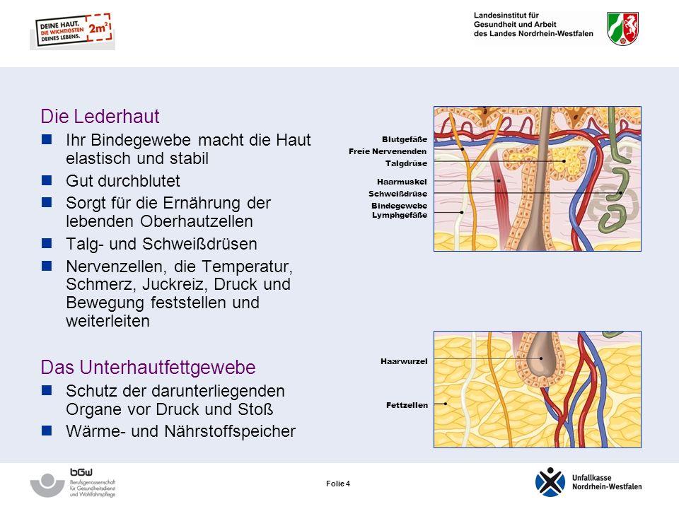 Folie 4 Die Lederhaut Ihr Bindegewebe macht die Haut elastisch und stabil Gut durchblutet Sorgt für die Ernährung der lebenden Oberhautzellen Talg- und Schweißdrüsen Nervenzellen, die Temperatur, Schmerz, Juckreiz, Druck und Bewegung feststellen und weiterleiten Das Unterhautfettgewebe Schutz der darunterliegenden Organe vor Druck und Stoß Wärme- und Nährstoffspeicher Freie Nervenenden Blutgefäße Talgdrüse Haarmuskel Lymphgefäße Schweißdrüse Bindegewebe Haarwurzel Fettzellen