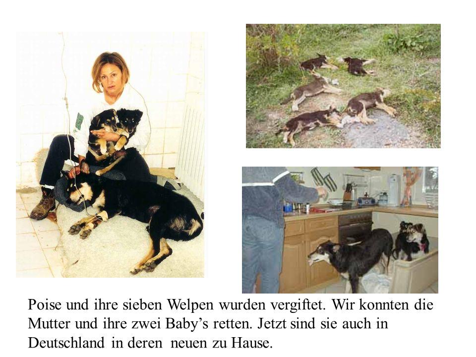 2004 ve 2005 yazında, Almanyadaki dernek, sahiplendirdiğimiz hayvanların ailelerinin birçoğunun katıldığı bir summerfest düzenledi.