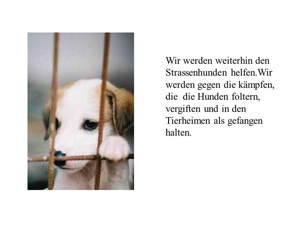 Wir bedanken uns an dieser Stelle an allen Personen, vor allem dem Verein Hunde in Not und Marja&Martin Vanderstappen, die uns bei unserem Kampf unterstützt haben.