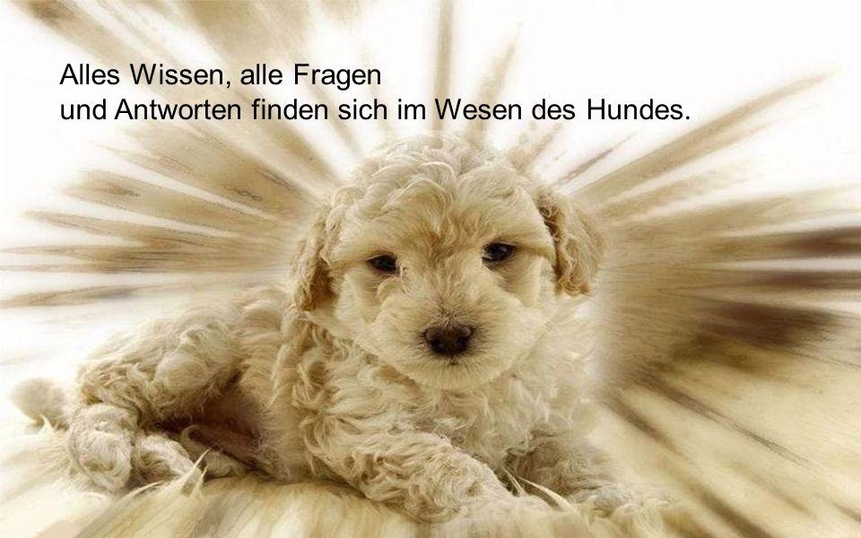 Alles Wissen, alle Fragen und Antworten finden sich im Wesen des Hundes..